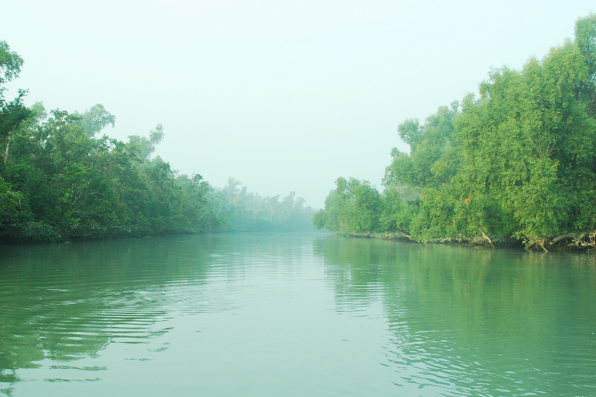 Sundarban Bangladesh Green Wallpaper